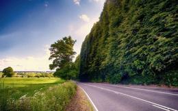 Thú vị hàng rào cao nhất thế giới lên tới 30m, phải mất 6 tuần để tỉa xong