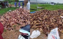 Xót xa hình ảnh 10.000 con gà chết chất đống sau cơn lũ dữ trong đêm