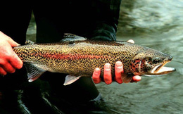 Phát hiện số lượng cá nuôi trong ao ngày càng giảm dần, người đàn ông theo dõi và phát hiện cảnh tượng không thể ngờ tới