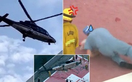 """Số phận oái oăm của quả tim được hiến tặng: Còn """"sống"""" sau tai nạn máy bay, bác sĩ đánh rơi xuống đất vẫn không hề gì"""