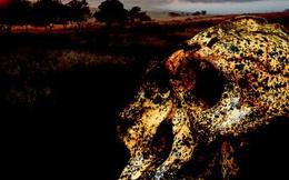 Hài cốt 2 triệu năm tiết lộ sự biến hình gây sốc của… con người