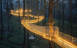 Cây cầu 'phát ánh sáng' kỳ diệu trong khu rừng Indonesia