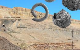 Sinh vật hình… phôi thai từ thế giới đã mất 570 triệu năm trước
