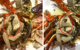 """Bỏ hơn 1 triệu ăn buffet hải sản ở nhà hàng nổi tiếng Hà Nội, thực khách bất ngờ phát hiện """"cua có giun"""" nhưng câu trả lời từ nhà hàng lại là thứ kỳ lạ khác?"""