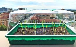 Loại đất mới tự lấy nước từ không khí tưới cho cây