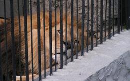 """Bên trong sở thú khắp thế giới nơi các con vật bị ngược đãi để """"mua vui"""" cho con người, đến nỗi phải trả giá bằng cả tính mạng của mình"""