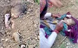 Bé gái sơ sinh bị chôn sống may mắn được phát hiện, hình ảnh giải cứu khiến ai cũng thương