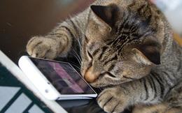 Cựu kỹ sư Amazon phát triển ứng dụng dịch tiếng mèo kêu sang ngôn ngữ con người hiểu được