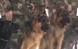 Video: Chó nghiệp vụ của Bộ đội Tên lửa Trung Quốc huấn luyện thế nào?