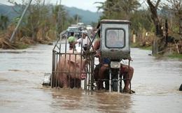 24h qua ảnh: Người đàn ông chở lợn trên đường phố ngập lụt