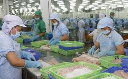 Cá tra Việt Nam chiếm ưu thế ở thị trường Trung Quốc