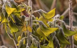 Kỳ lạ loài cây có hoa hình dạng như... chim