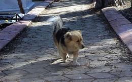 Sáng nào chó cưng cũng chạy khỏi nhà, người đàn ông tò mò đi theo để rồi xúc động mạnh khi đến nơi