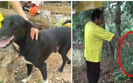Chú chó khuyết tật sủa ầm ĩ khiến người dân chạy ra đuổi đánh nhưng khi biết được thứ chôn giấu dưới gốc cây, cả làng liền biết ơn con vật