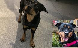 Nhỡ mồm chửi chó cưng vì nó không chịu ngủ, anh chàng nhận luôn đơn kiện rồi bị cấm nuôi động vật 5 năm