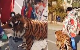 Người dân hết hồn vì thấy hổ lớn lang thang trên phố, nhìn kỹ lại thêm phẫn nộ với hành động ích kỷ của con người