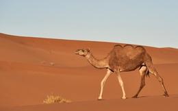 3 bài học từ 'biểu tượng của sa mạc' sẽ giúp bạn xây dựng doanh nghiệp thành công: Điều đầu tiên là yếu tố không thể thiếu để phát triển vững chắc