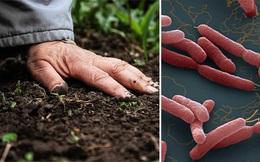 Liên tiếp các ca bệnh Whitmore: Chuyên gia Bệnh viện Bạch Mai cảnh báo gấp