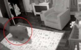 Chó cưng thường lẻn vào phòng con gái nhỏ mỗi tối, bố mẹ kiểm tra camera mới thầm biết ơn con vật