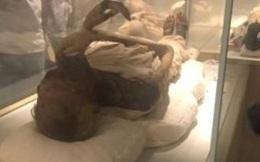 Ai Cập vận chuyển xác ướp quy mô lớn theo phong cách cổ đại