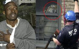 """Thanh niên bị chó cắn, bác sĩ nghi ngờ liền báo cảnh sát rồi phát hiện con hổ """"thú cưng"""" hơn 200kg tại nhà anh chàng và màn giải cứu ngoạn mục"""