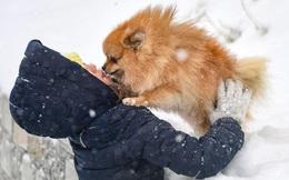 7 ngày qua ảnh: Cô gái Nga chơi đùa với cún cưng dưới mưa tuyết
