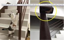 """Vợ bất ngờ phát hiện """"quỹ đen"""" của chồng ở nơi hiểm hóc nhờ hành động """"ngờ vực"""" của những chú mèo"""