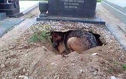 Thấy con chó đào hang nằm dưới ngôi mộ trong nghĩa trang, ai cũng nghĩ nó trung thành với chủ nhưng lại gần mới ngỡ ngàng