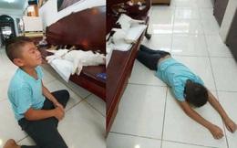 Chó mèo lăn đùng ra bất tỉnh khiến cậu chủ úp mặt xuống sàn gào khóc, sự thật khiến dân mạng không thể nhịn cười