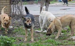 Nghe tiếng động, người đàn ông tới gần thì sững sờ khi thấy 4 con chó đang bảo vệ 1 thứ