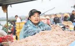 Ngư dân Hà Tĩnh trúng đậm ruốc biển, thu tiền triệu mỗi ngày