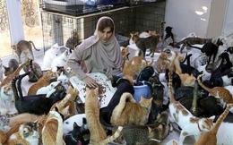 Người phụ nữ làm bạn với gần 500 con mèo