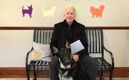 Ông Biden trẹo mắt cá chân khi chơi cùng cún cưng