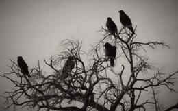 Bị hỏi vương quốc có bao nhiêu con chim, tể tướng đưa ra đáp án kinh ngạc, vua gật gù đồng tình
