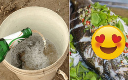 Một thanh niên vừa câu cá xong 'rảnh tay' trút nguyên chai bia vào xô cá, kết quả món ăn lên đĩa ai nấy đều bất ngờ
