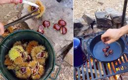 Hoá ra đây là cách người ta hái hạt dẻ từ trên cây rồi ăn liền tại chỗ, sang Việt Nam giá không hề rẻ tí nào