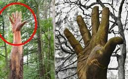 Giữa rừng cây xanh bỗng trồi lên một bàn tay khổng lồ gân guốc gây kinh hãi nhưng sự thật lại khiến mọi người phải trầm trồ