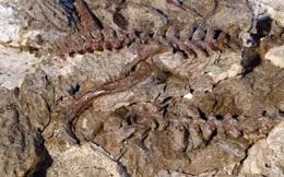 Kinh ngạc hóa thạch sinh vật biến hình dở dang thành quái thú bay