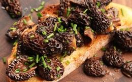 Loài nấm lạ nhìn như tổ ong có giá lên tới 11 triệu VNĐ/kg khiến giới đầu bếp Pháp mê đắm: Hương vị tuyệt hảo, nhưng lợi ích sức khỏe mới đáng chú ý