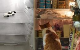 'Hội FA' xứ Trung khoe tủ lạnh: Người dùng bảo quản chăn bông và ô tô đồ chơi, kẻ lấy chỗ tích trữ đồ ăn cho 'quàng thượng'