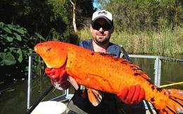 Cá vàng khổng lồ đột nhiên xuất hiện ở Mỹ