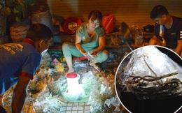 Cận cảnh chợ côn trùng độc nhất Sài Gòn, mỗi ngày chỉ họp đúng 2 tiếng lúc nửa đêm