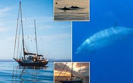 Phát hiện loài thủy quái chưa từng thấy trên thế giới, còn sống!