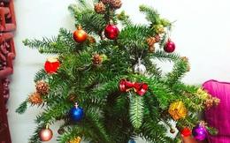 Cành thông tươi sẵn quả giá 'hạt rẻ', hot dịp Giáng sinh, khách háo hức rủ nhau mua
