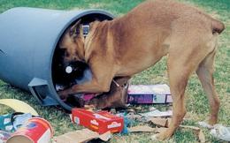 Chó bới thùng rác liên tục, người đàn ông trách hàng xóm bỏ bê thú cưng đến đói khát nhưng thay đổi thái độ khi thấy thứ trên miệng con vật