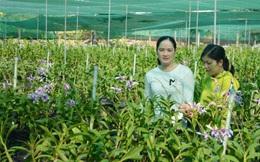 Làm giàu từ hoa lan