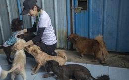 Bị chó nhà cắn, nữ sinh Trung Quốc rơi vào cảnh chết não