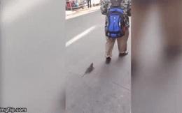 Video: Kỳ quặc người đàn ông dắt 2 con chuột đi dạo trên phố như thú cưng