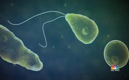 Amip ăn não gây chết người lan từ Nam lên Bắc nước Mỹ