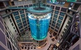 Clip: Độc đáo chiếc thang máy nằm giữa bể cá khổng lồ